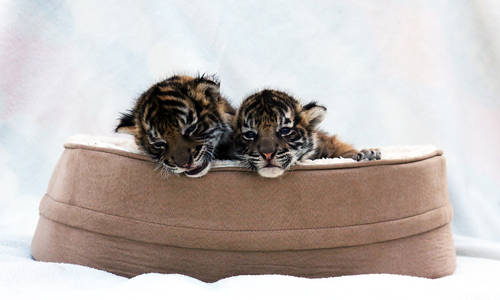 Paradise Country's Animal Nursery  Is Going Wild These School Holidays