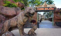Dreamworld responds to Tiger Island footage