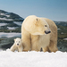 Polar Bear Cub explores Cub Kindy